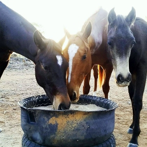 horse feed mixes